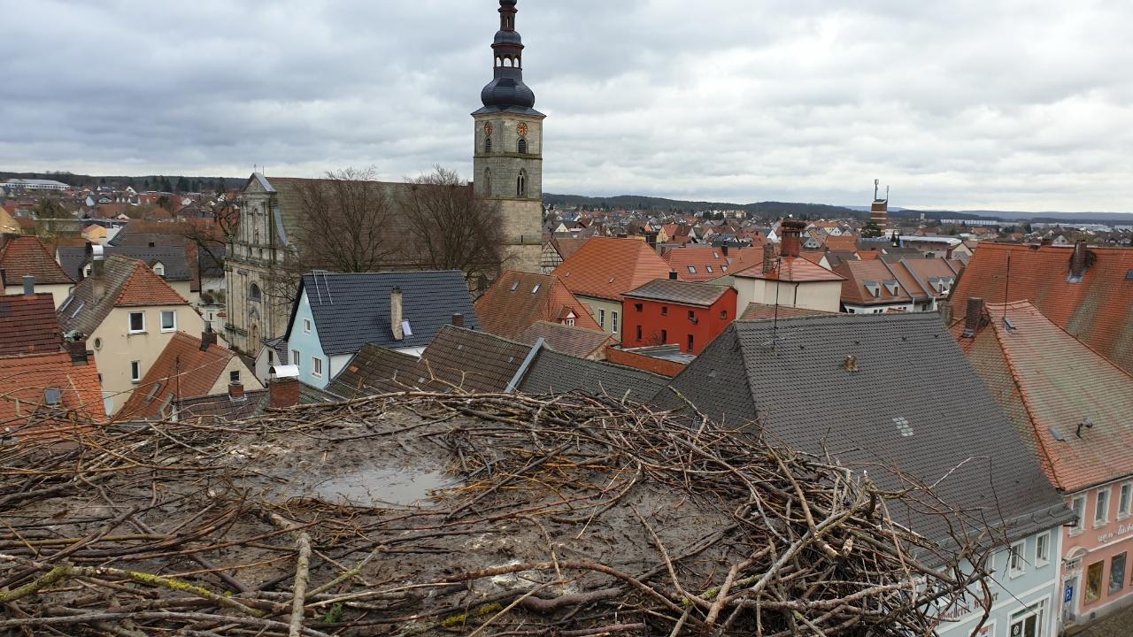 Storchencam Höchstadt